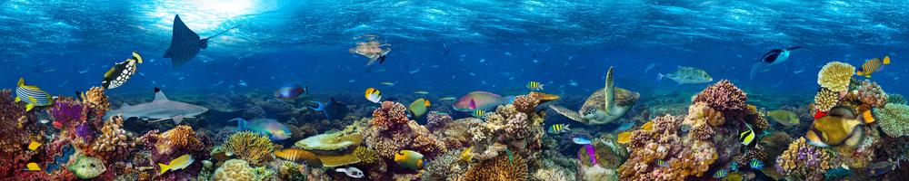 Découvrez les aquariums les plus spectaculaires au monde