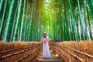 La forêt de bambous de Sagano