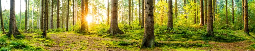 Découvrez les forêts les plus incroyables au monde