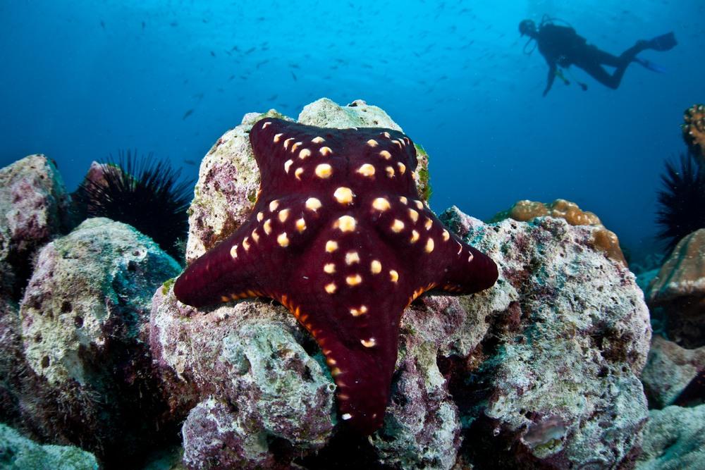 L'île Cocos, Costa Rica